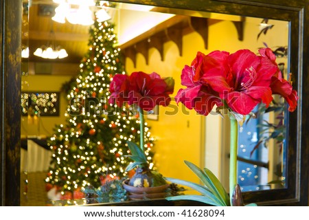 A red Amaryllis flower in front of a framed mirror, with a reflection of itself and a large lit christmas tree behind. - stock photo