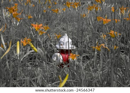 a red and white fire hydrant standing out among orange daylilies. - stock photo