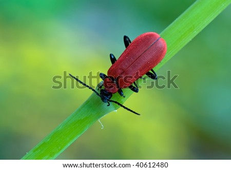 a red bug - stock photo