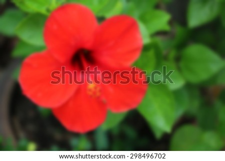 a red hibiscus flower  ,blurry background - stock photo