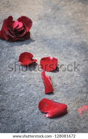 A red Rose broken on a ground