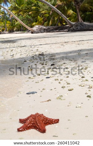 a red starfish lying on beach - stock photo