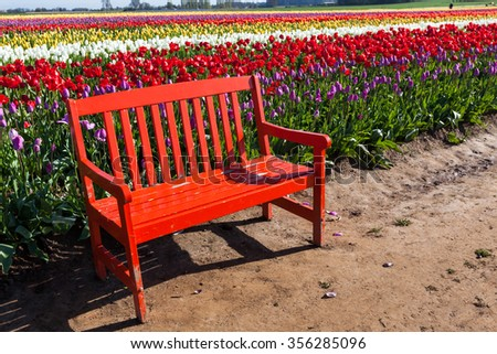 A red wooden bench sitting next to rows of bright springtime tulip flowers on a farm in Oregon.