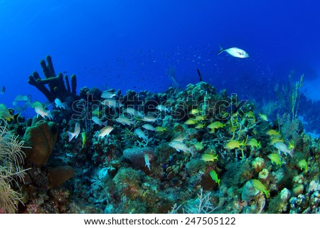 A reefscape full of fish, Grand Cayman - stock photo