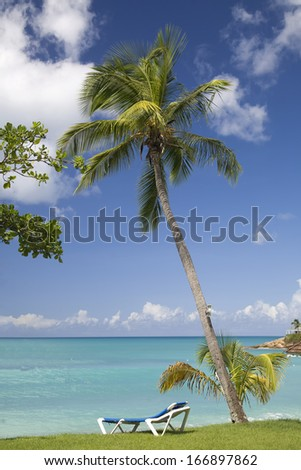 A relaxing lounge chair under a palm tree along the shores of Antigua.