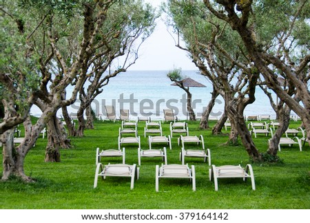 A relaxing place with sun beds under olive trees by seaside on southern Europe - stock photo