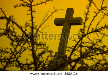 A Religious symbol behind a bush of thorns - stock photo