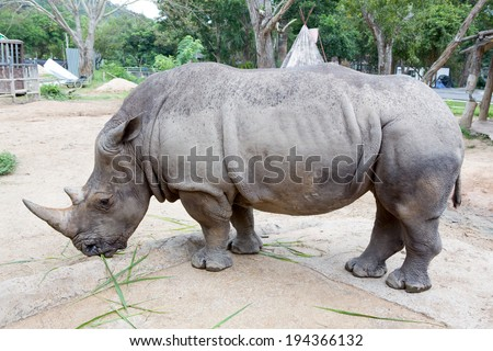 a rhino from a zoo of thailand - stock photo