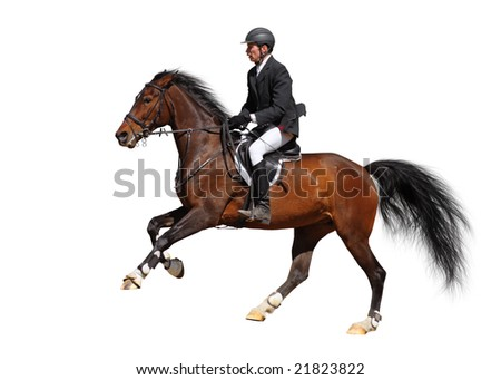 A rider in a show jumping running at full speed - isolated on white - stock photo