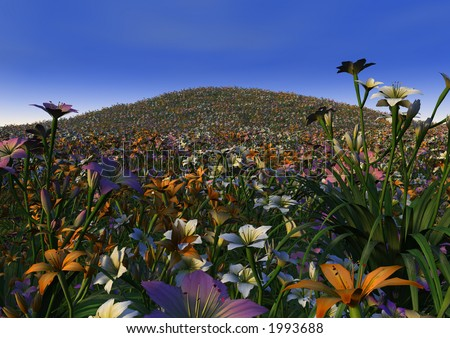 A riot of colour in an infinite field of lilies - stock photo