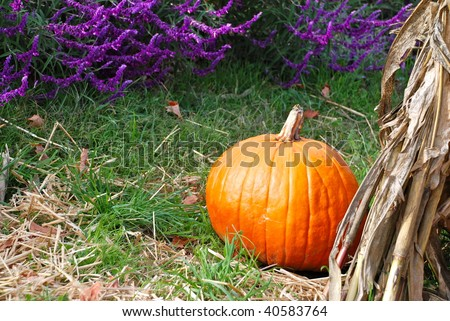 A ripe pumpkin for sale at a local farm. Pumpkin is sitting next to pretty purple flowers and dried corn stalks. - stock photo