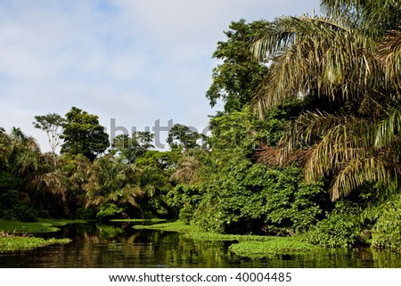 A river and beautiful trees in a rain forest