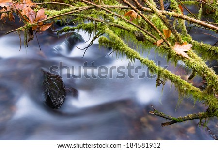 A river in the forest carries water down from the mountains - stock photo