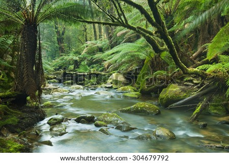 A river running through a beautiful temperate rainforest. The runoff of the Beauchamp Falls in the Great Otway National Park, Victoria, Australia. - stock photo