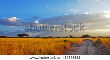 A road going through golden savannah planes - stock photo