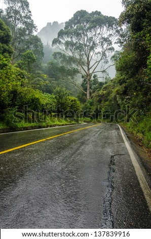 A road leading into a lush mist shrouded forest - stock photo