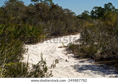 A road made of soft sugar sand winds through tropical brush in florida on a sunny day. - stock photo