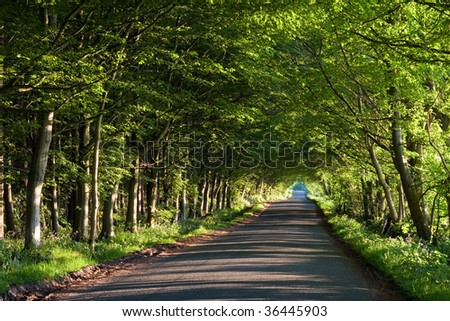 A road running through a tunnel of green trees on a summer afternoon - stock photo