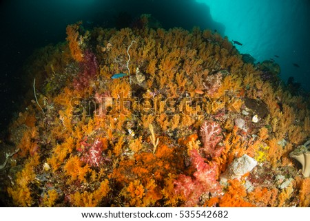 A rock full of colorful orange soft corals