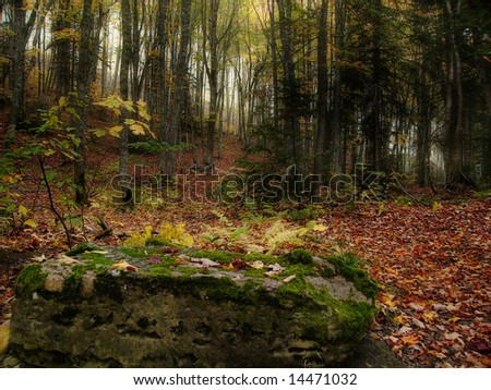 A rock in the forest at fall - stock photo
