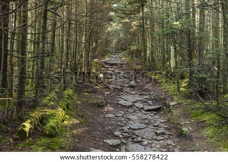 A rocky path through hardwood forest on the trail to Slide Mountain in the Catskills Mountains of New York.