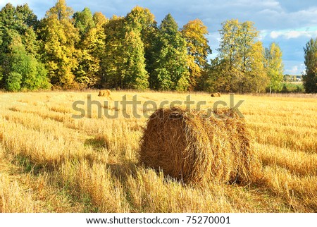 A roll of straw. Autumn landscape. Harvesting - stock photo