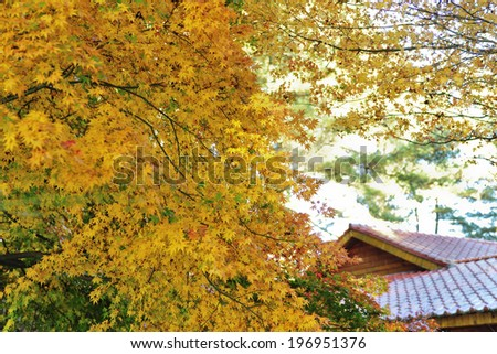 A roof of a home with leafy trees in the yard.