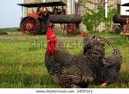 A rooster in front of an old abandoned steam engine tractor - stock photo
