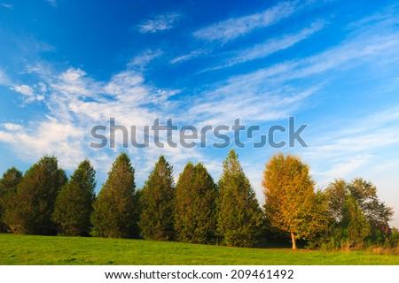 A row of autumn trees, Stowe, Vermont, USA - stock photo