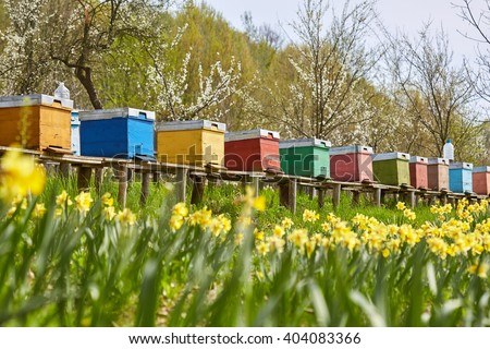 A row of bee hives in a field of flowers with an orchard behind - stock photo