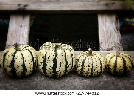 A row of four freshly picked organic pumpkins - stock photo