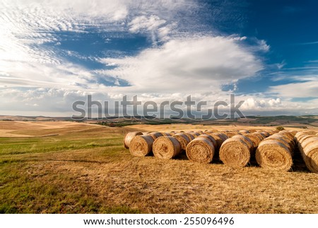 A row of hay bales on a field after havest with blue cloudy sky. Location: near Siena, Tuscany, Italy. - stock photo