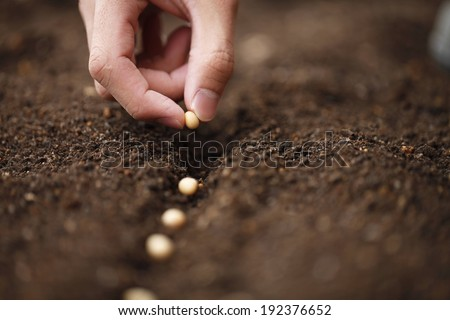 A row of seeds being planted in the soil. - stock photo