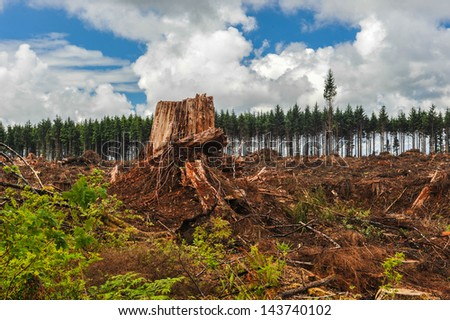 A row of trees are behind an area of clear cut forest - stock photo