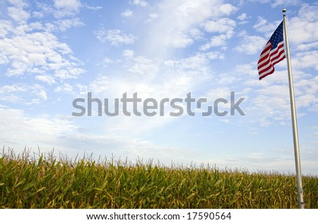 A rural American cornfield with an American flag flying overhead. - stock photo