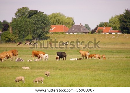 A rural landscape with cows and sheep in a meadow - stock photo