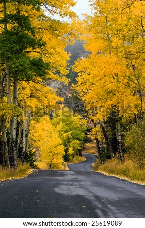 A rural road draped in fall color inside Colorado's Rocky Mountain National Park portray the Aspen trees in their vivid gold and yellow hues - stock photo