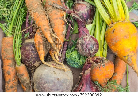 A rustic, close up view, of freshly picked vegetables. carrots, yellow beetroot, red beetroot, red onions, and broccoli.