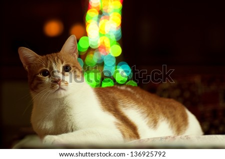 a rusty / brown / ginger home cat sitting / lying in a dark scene and a colorful blur spots city lights in the background - stock photo