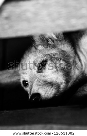 A sad and lonely puppy - stock photo