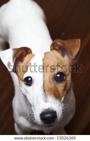 A sad looking dog. - stock photo