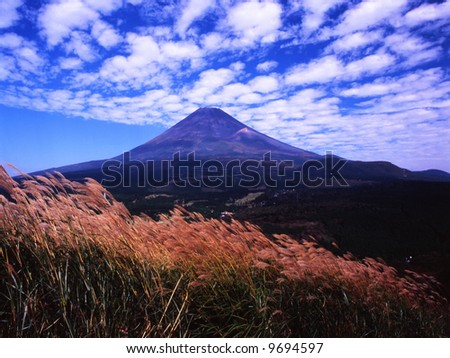 A scale clouds over Mt Fuji peak and wing Japanase pampas grass - stock photo