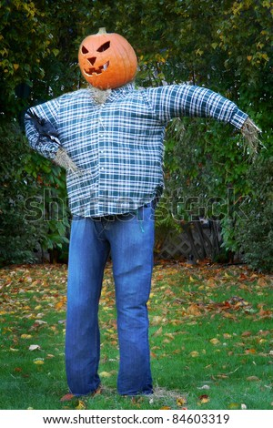 A scarecrow dressed in denim jeans and a blue plaid shirt, with a grinning jack o' lantern (pumpkin) head. - stock photo