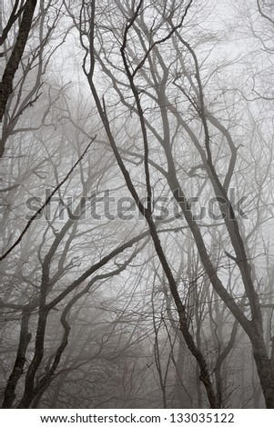 A scary trees with roots in a dark forest. - stock photo
