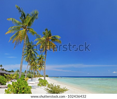 A scene from Maldives island with sandy beach, palm trees and turquoise sea