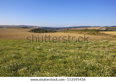 a scenic agricultural landscape at harvest time with patchwork fields and corn chamomile in the foreground in the yorkshire wolds england under a blue sky - stock photo