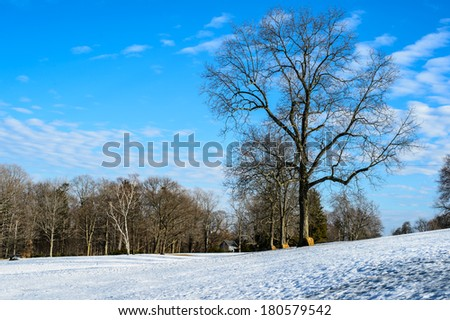 a scenic cold winter landscape with snow and trees - stock photo