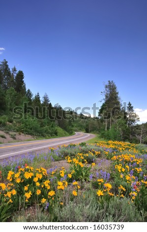 A scenic mountain road curves through fields of wildflowers near the Grand Tetons. - stock photo