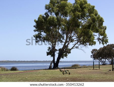 A scenic  view of the foreshore  with eucalypt tree  of the    Leschenault Estuary   conservation park near Australind Western Australia on a calm day in early summer as the tide is receding.