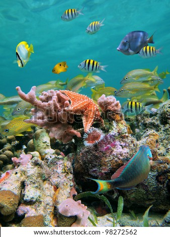 A school of colorful tropical fish with a red sea star and pink sponge in a coral reef beneath the water surface, Caribbean sea - stock photo